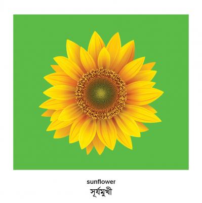 Plants (English–Bengali) Milet