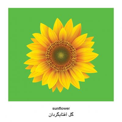 Plants (English–Farsi) Milet